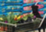 thumbnail_IMG_0703_edited_edited.jpg