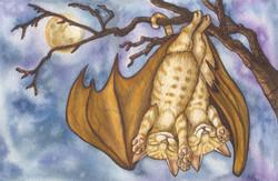 Bat Cats