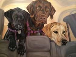 Rocco,Monty and Bella
