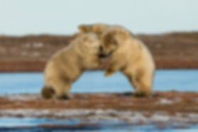 Will Rose and Kajsa Sjölander Arctic Photography