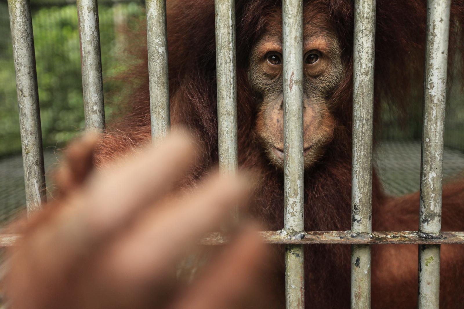 Surviving Sumatra