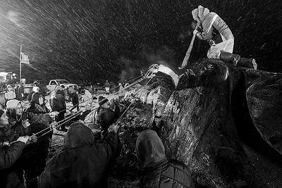 Will Rose Arctic Photo