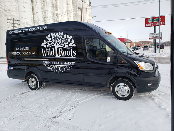 Wild roots 4.jpg