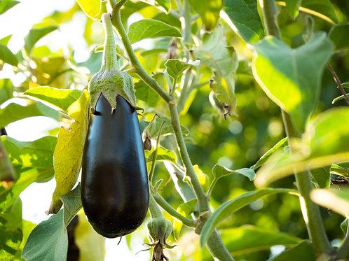 Eggplant - Black Beauty (Heirloom)