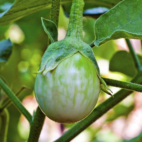 Eggplant - Petch Siam Thai