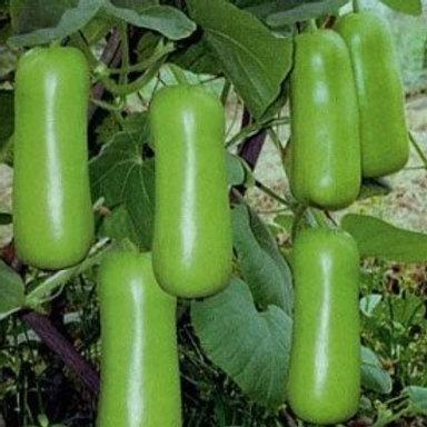 Bottle Gourd - Dhol