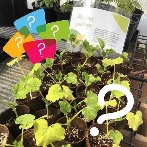 Mystery Seedling