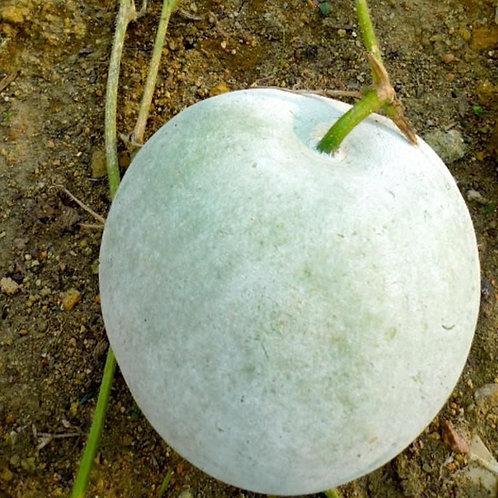 Wax Gourd (Wax Melon) - Round