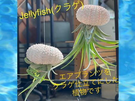 jellyfish 〜くらげ〜