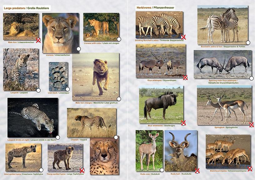 Etoscha Wildtiergalerie Paul 02.jpg
