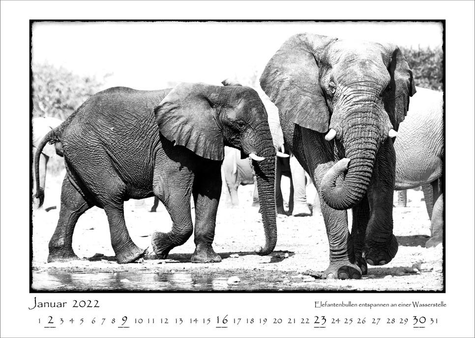 Elefanten_02.jpg