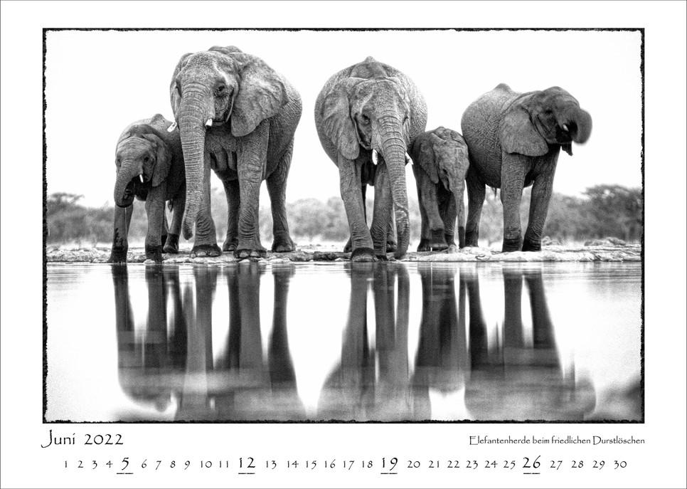 Elefanten_07.jpg