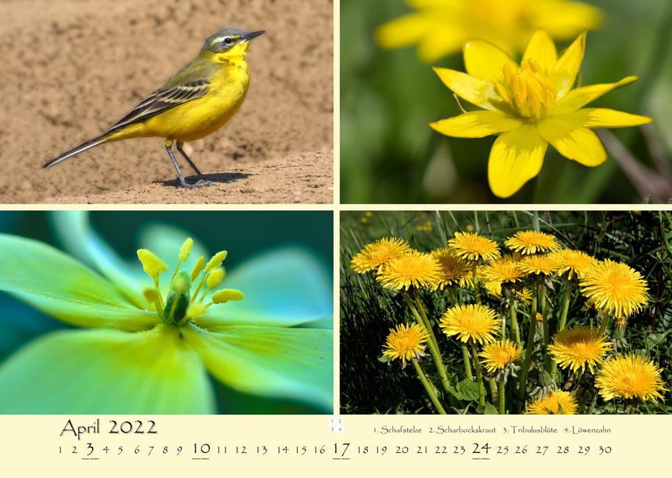 Natur_05.jpg