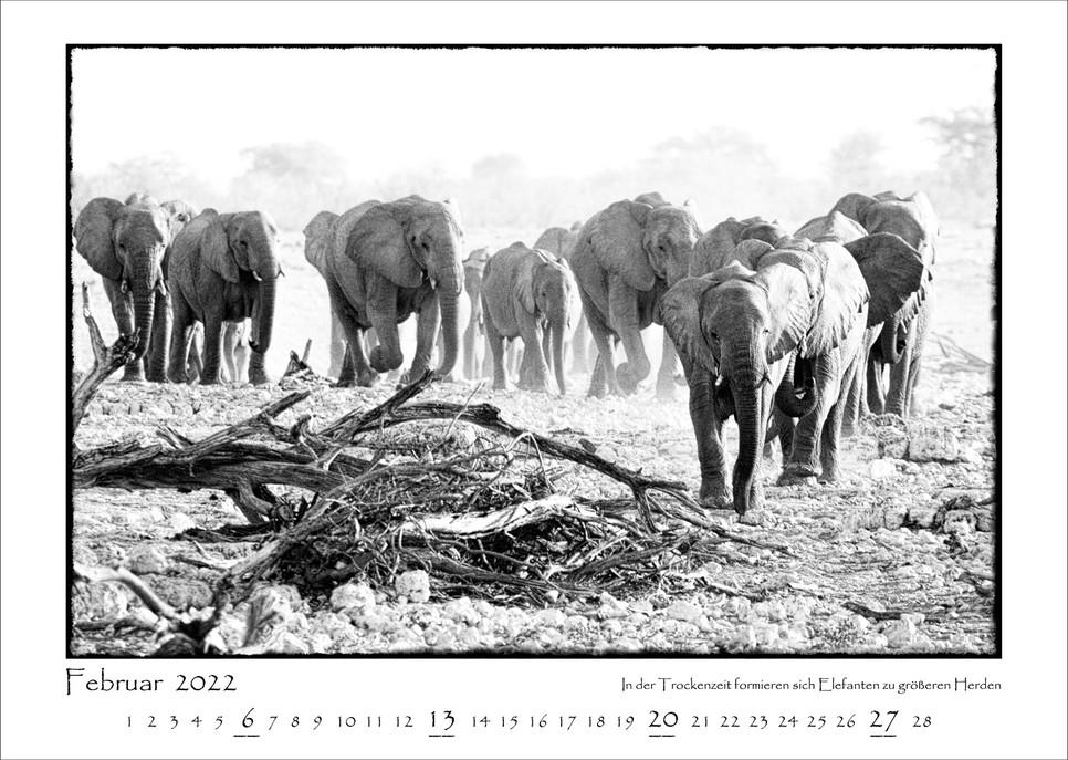 Elefanten_03.jpg