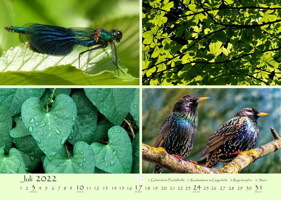 Natur_08.jpg