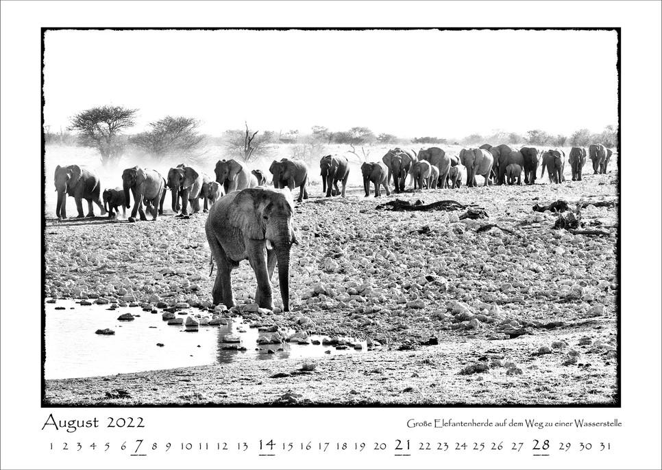 Elefanten_09.jpg