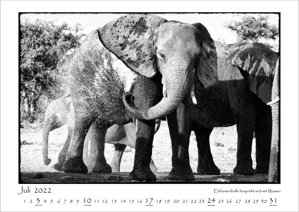 Elefanten_08.jpg