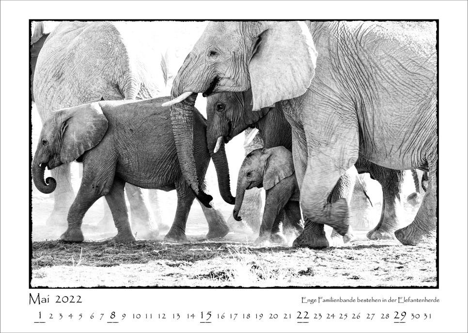 Elefanten_06.jpg