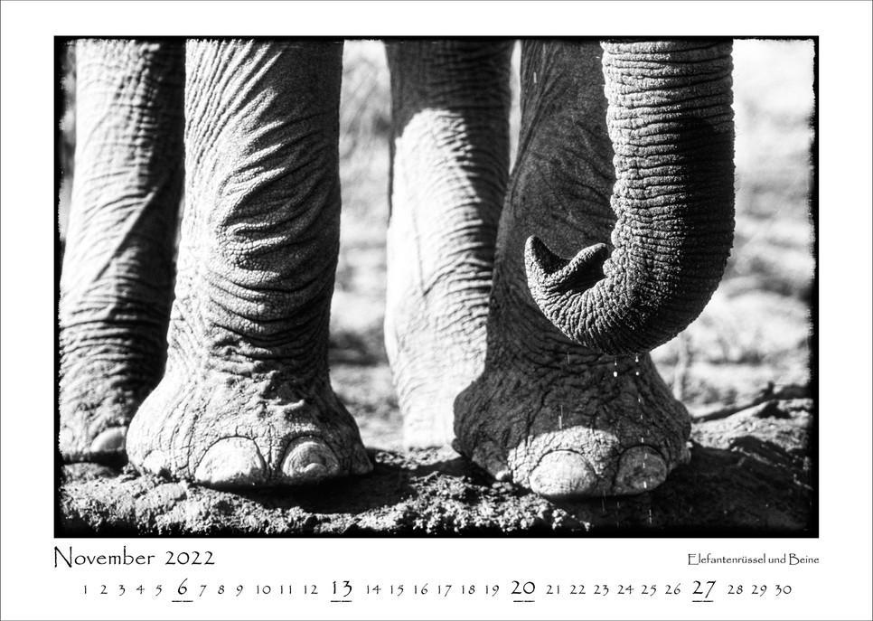 Elefanten_12.jpg