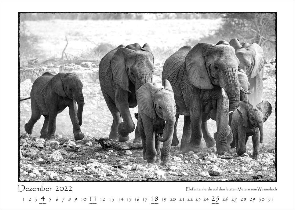 Elefanten_13.jpg