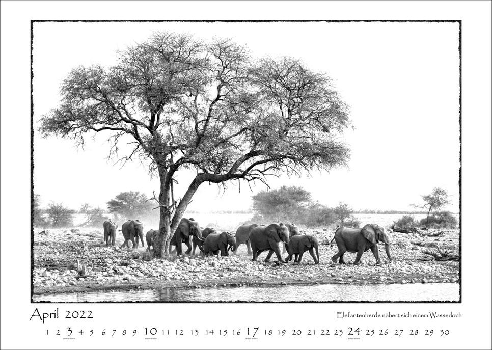 Elefanten_05.jpg