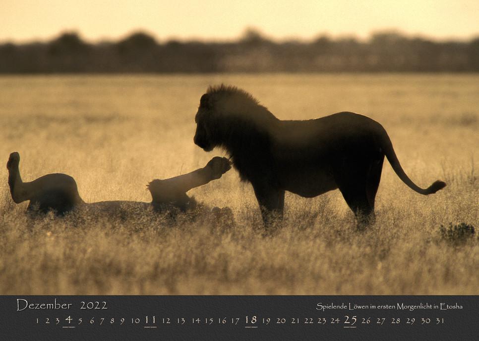 AfrikanischesLicht2022_13.jpg