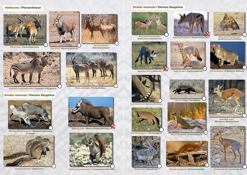 Etoscha Wildtiergalerie Paul 03.jpg
