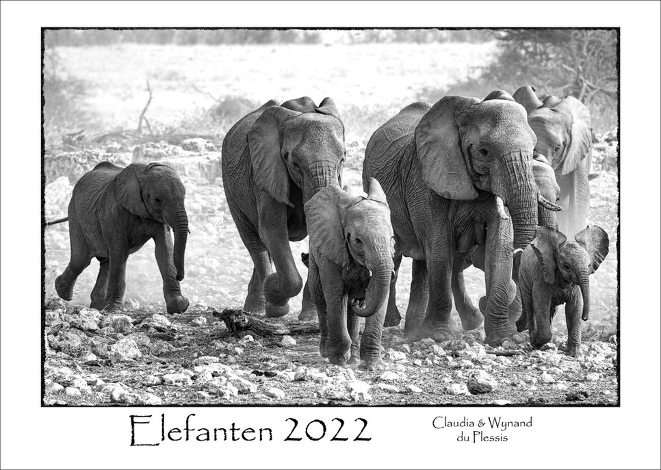 Elefanten_01.jpg