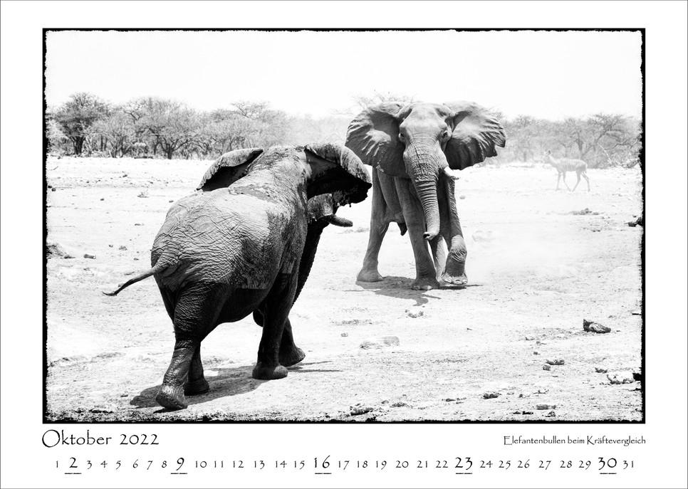 Elefanten_11.jpg