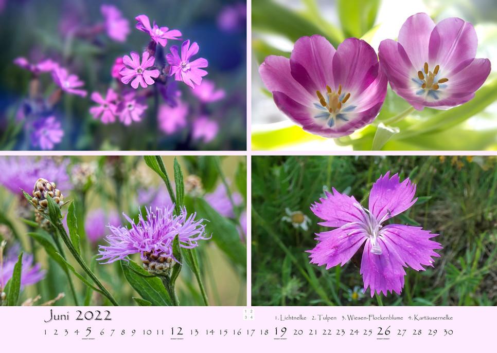 Natur_07.jpg