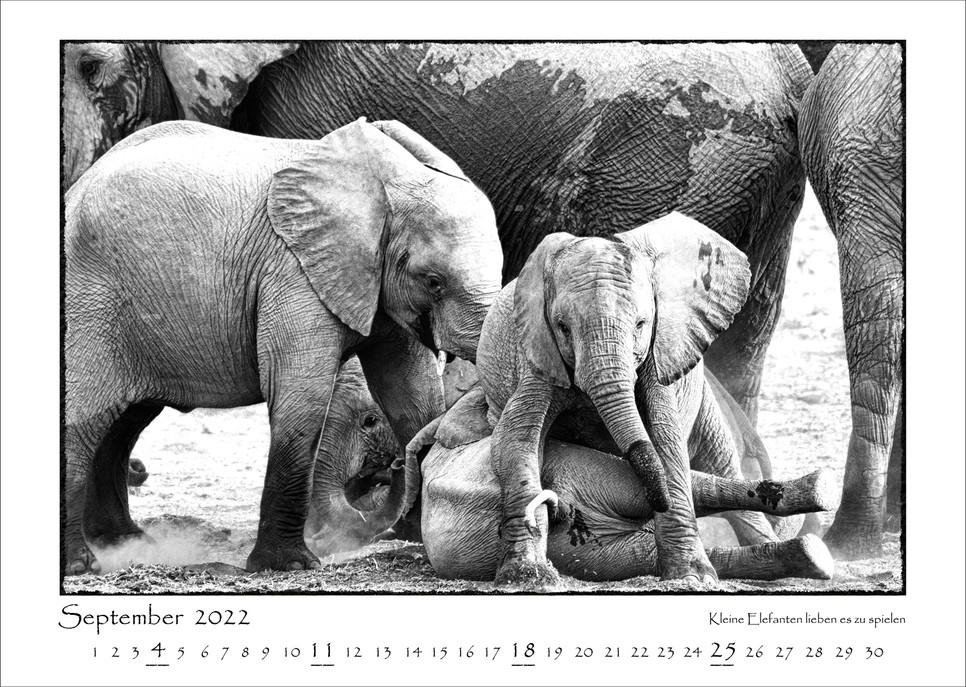 Elefanten_10.jpg