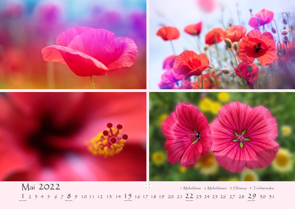 Natur_06.jpg