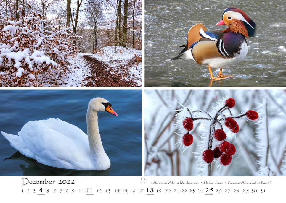 Natur_13.jpg
