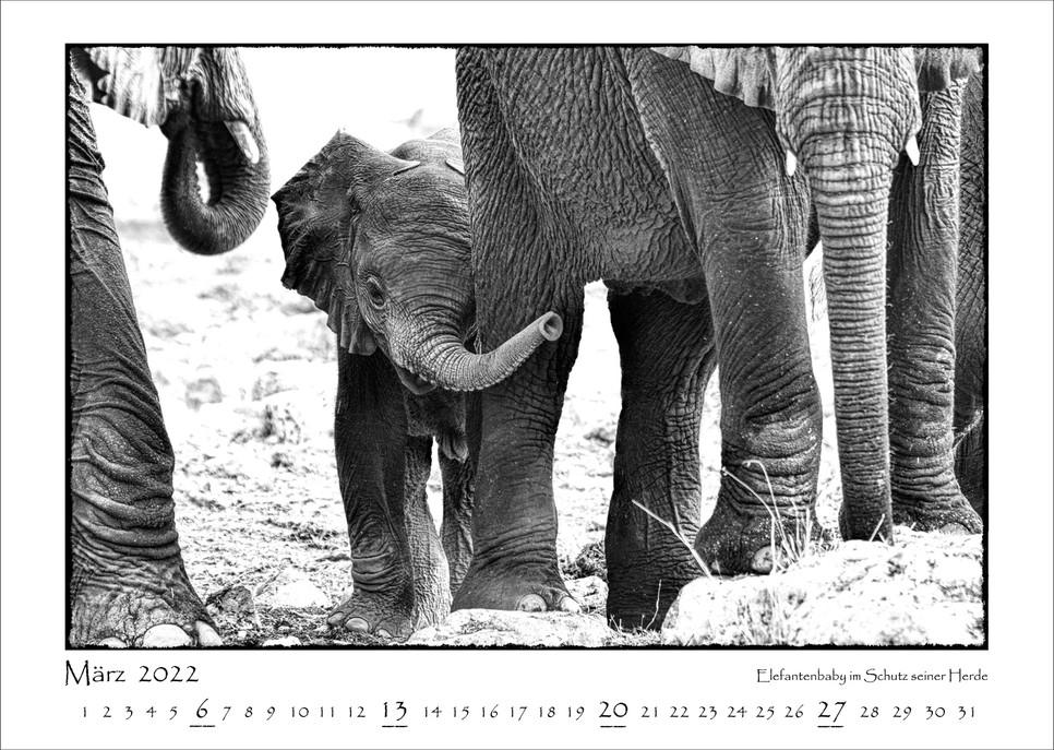 Elefanten_04.jpg