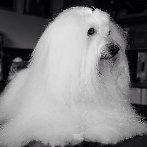 chien blanc 3.jpg