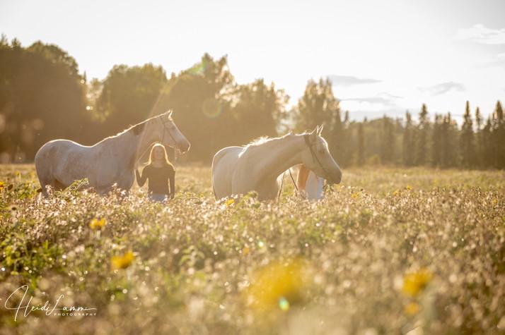 Auringonkukkapelto Tuomarinkylässä