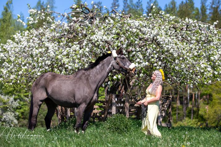 Omenapuun kukinto