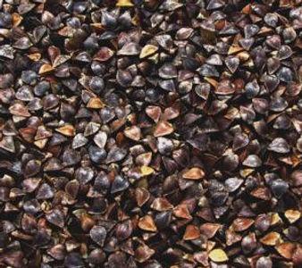 Buckwheat 2.jpg