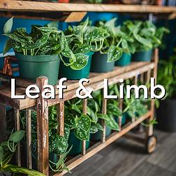 Leaf-and-Limb.png