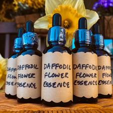 Daffodil Flower Essence