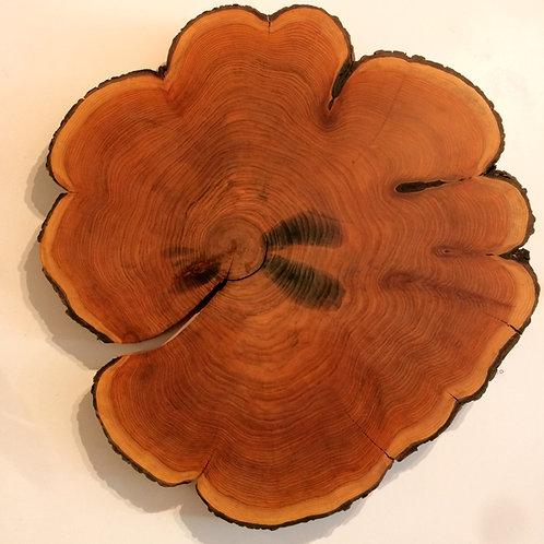 Tree Slice 1