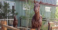 top-horse.jpg