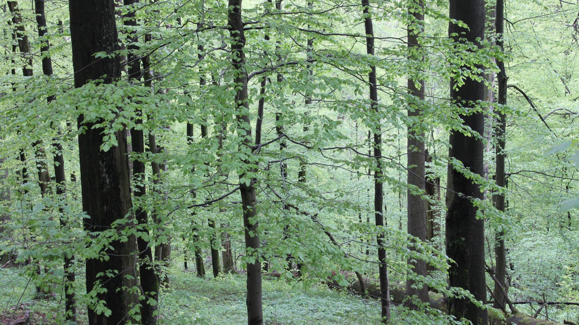 Ein Wald voller Eindrücke