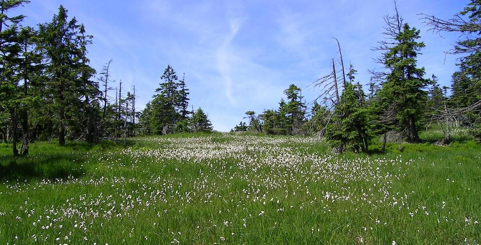 Hochmoor im Harz