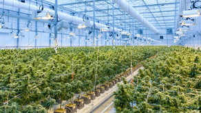 """Marijuana business """"tripped up"""" at state borders due to interstate transportation prohibition"""