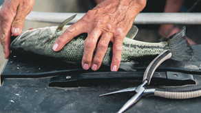 Keeping large fish, selects for smaller fish