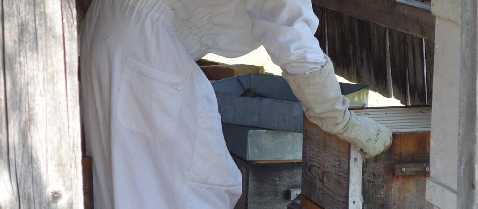 Le rucher à 100 m du gîte