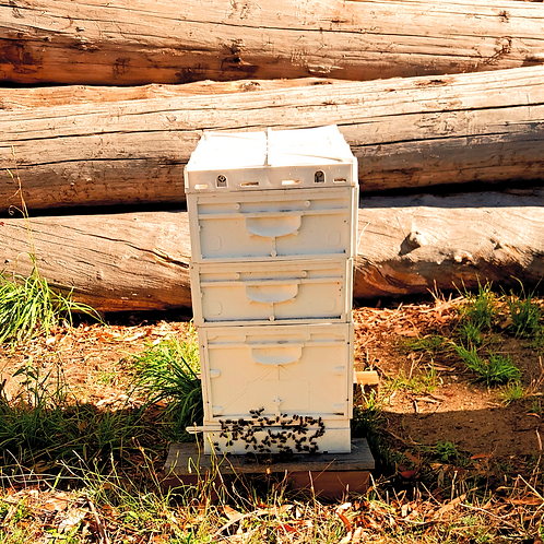 Bee Hive with Colony
