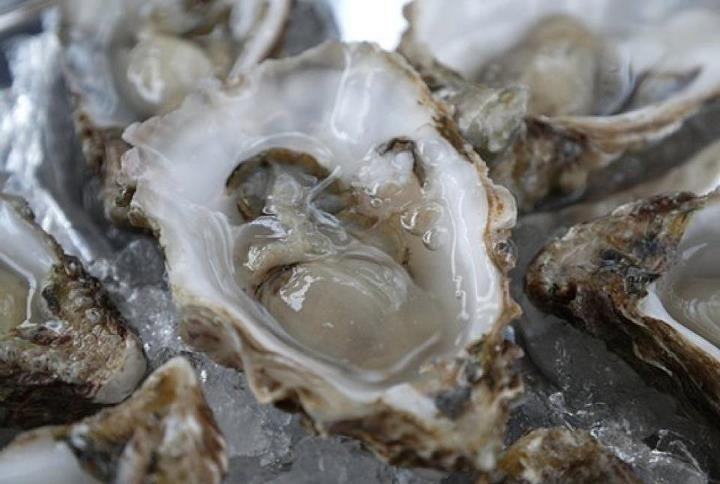 Oysters 01.JPG