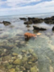 Levi at beach.jpg